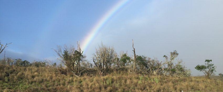 Rainbow Connection