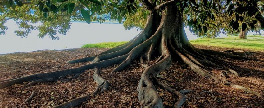 Pondering the things of God: Where do your Roots Grow into?